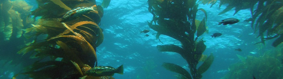 2 Million Kelp Classifications at Floating Forests!