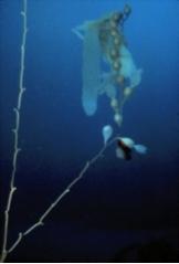 kelp_nutrients