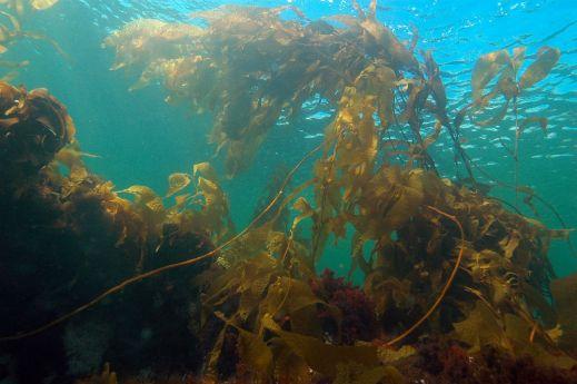 https://seaweedindustry.com/