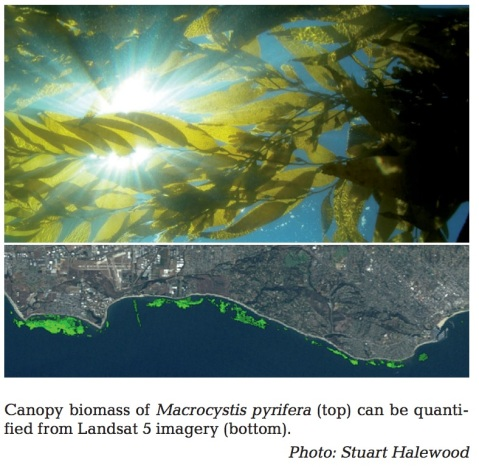 Fig 1 from Kyle's Original work on kelp & Landsat